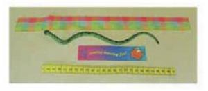 Ruler bookmark and snake image.