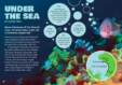 Under the Sea article